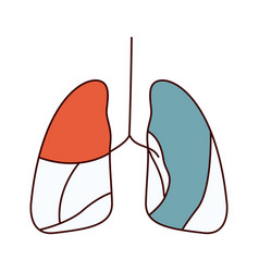 Color sections simple contour respiratory system vector