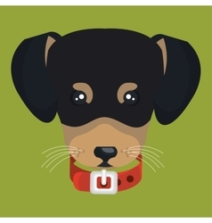Lovely face puppy with collar vector
