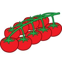 Cherry tomato vector image vector image