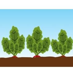 Vegetable radish in ground vector