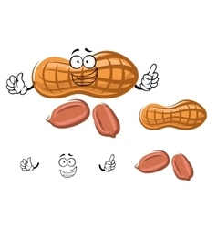 Cartoon peanut in shell with kernels vector image