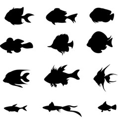 set black fish isolated on the white vector image