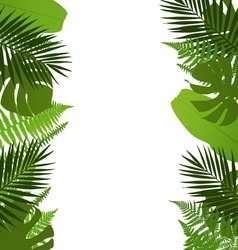 Tropical leaves background with palmfernmonstera vector image vector image