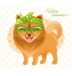 Summer fashion pomeranian spitz puppy dog in sweet vector