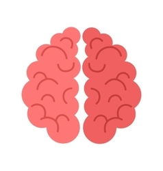 Human Brain Isolated on White Background vector image vector image