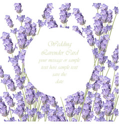 Lavender delicate wreath card springtime summer vector