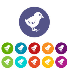 chick icons set flat vector image