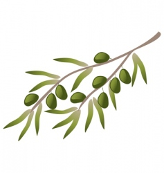 a branch of olive tree vector image