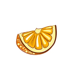 Hand drawn slice of orange vector