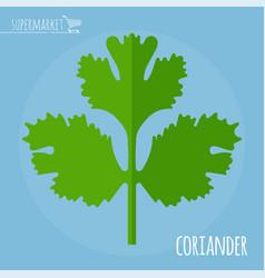coriander flat design icon vector image