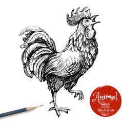 Hand drawn rooster  sketch chicken isolated on vector