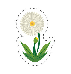cartoon daisy flower image vector image vector image