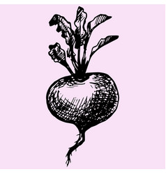 Turnip with leaves vector