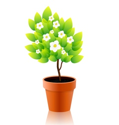 Plant box vector