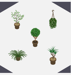Isometric plant set of houseplant plant blossom vector