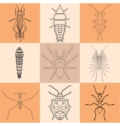 Insect icons set earwig and trilobite beetle vector