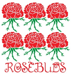 Rose buds vector