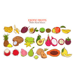 Colored fresh natural exotic fruits set vector