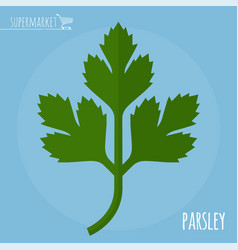 parsley flat design icon vector image