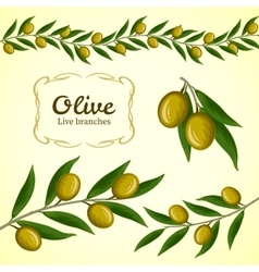 Collection of olive branch green olives vector
