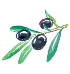 Black olives watercolor vector