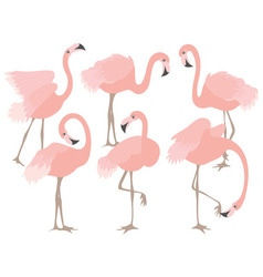 Coral Flamingo Set vector image