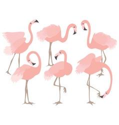 Coral flamingo set vector