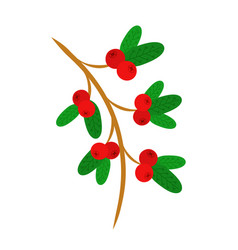 cowberry lingonberry on the branch sweet red vector image
