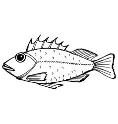rockfish vector image