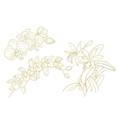 Set of one-colored outlined orchids vector