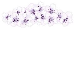 top frame bouquet sakura blue flowers vector image