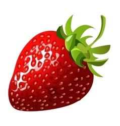 Delicious ripe sweet red strawberries closeup vector
