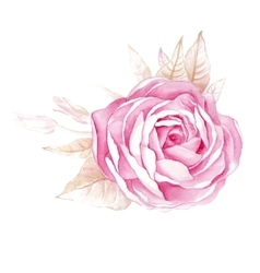 Watercolor of rose flower isolated vector