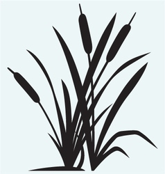 Silhouette reed vector