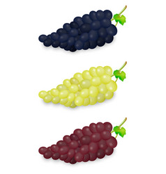 realistic blue green and red grapes bunch vector image