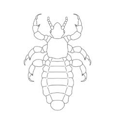 A head human louse pediculus humanus capitis vector