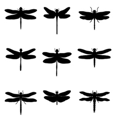 Silhouettes of dragonflies vector