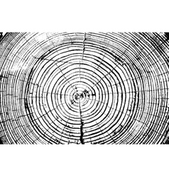 Tree rings saw cut tree trunk background vector image vector image