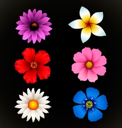 Flower isolated vector