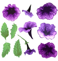 Hand drawn petunia set vector