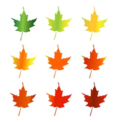 Leaves changing color vector image