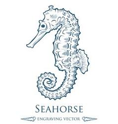 Seahorse Drawing vector image vector image