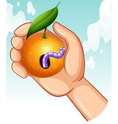 Worm in rotten orange vector