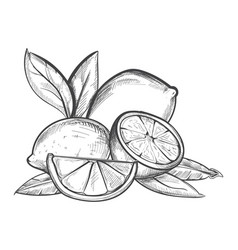Lemons hand drawn in black and vector