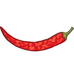 Dried spicy red pepper vector