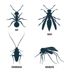 ant and wasp cockroach and mosquito vector image vector image