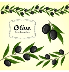 Collection of olive branch black olives vector