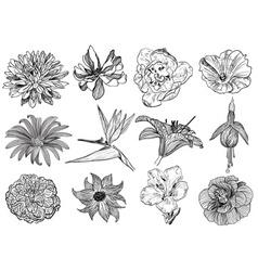 Floral Sketch Set vector image