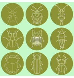 Insect icons set dor-beetle and firefly firebug vector