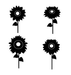 set of sunflowers silhouette vector image